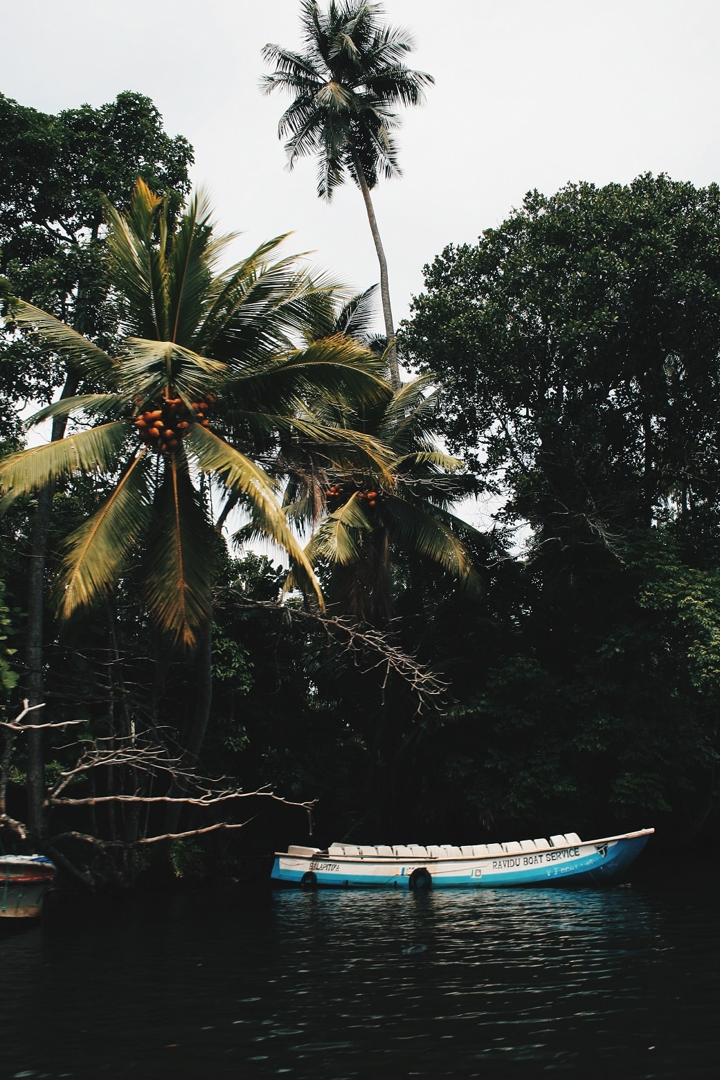 maduganga-boat-ride-sri-lanka-3