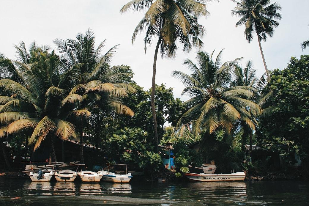 maduganga-boat-ride-sri-lanka-4