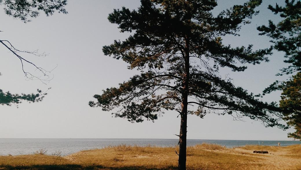 Saulkrasti Latvia - Baltic Sea
