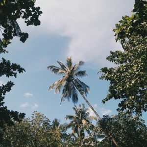 Ao Nang Beach Jungles
