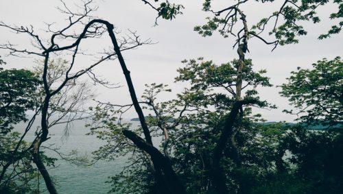 Ao Nang Monkey Trail Jungles