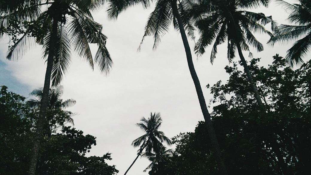 Ao Nang Palm Jungles