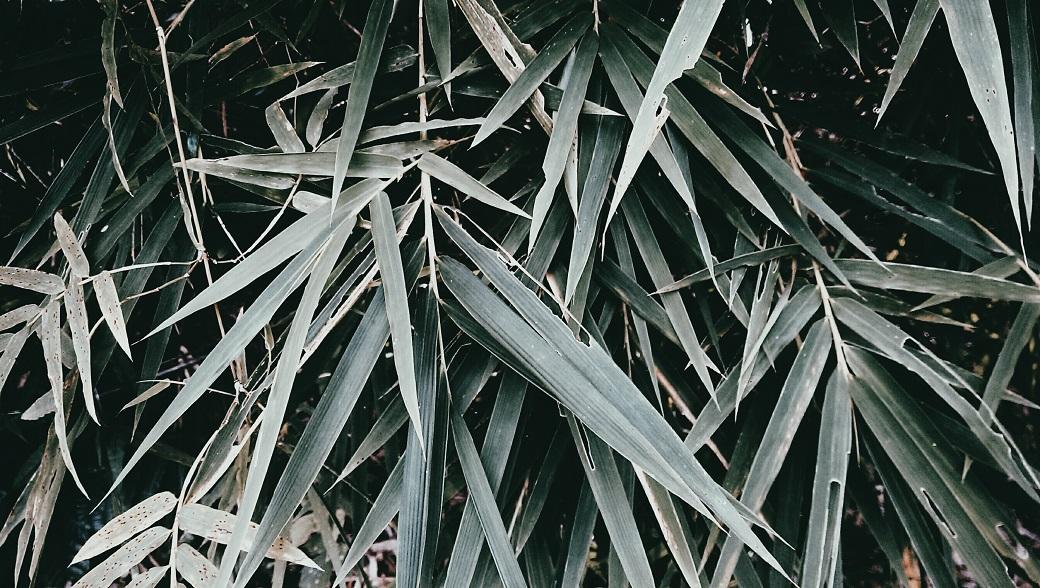 Bamboo Jungle Ao Nang Krabi