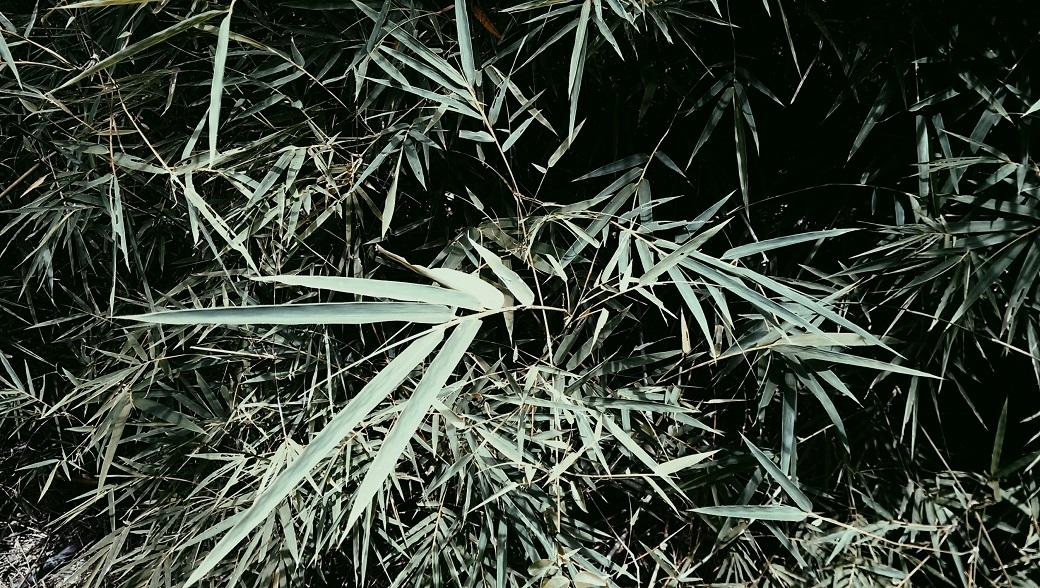 Bamboo Jungle Forest Krabi