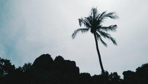Pai Plong Beach Cliffs Palms