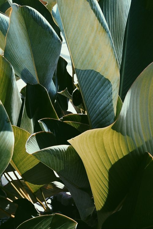 Tropical Leaves, Botanical Photography